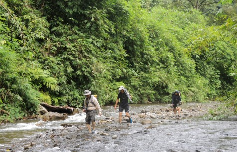 jungle trekking essay Jungle trekking - download as word doc (doc), pdf file (pdf), text file (txt) or read online.