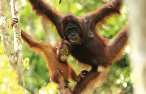 SEARCHING FOR INDONESIA'S  WILDLIFE THREATENED SPECIES