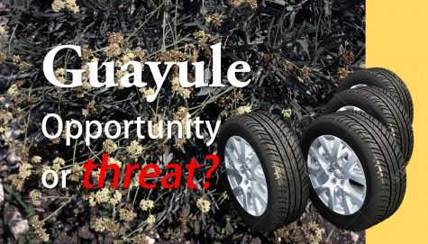Guayule Tire is Ready to Roll
