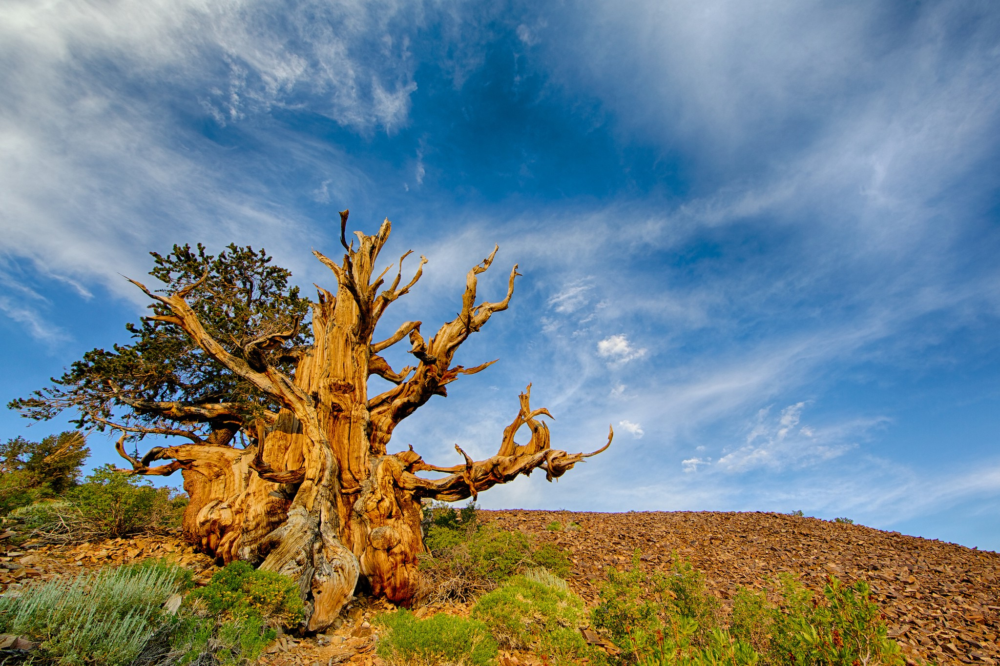 The 5 Strange Trees, which the wonders of Nature in the World.