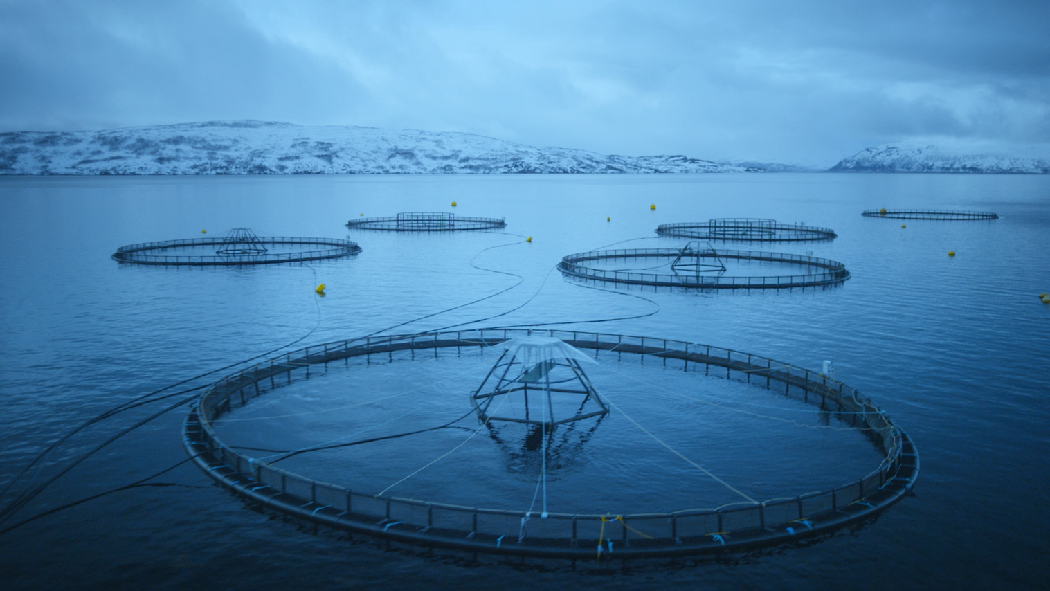 Salmon Fishing and Farming in Norway for Thailand and Beyond